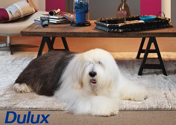 Dulux Dog And Cat