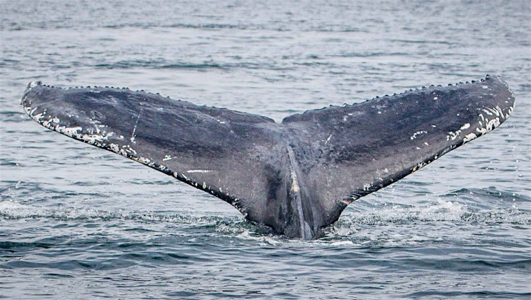 Can you go whale watching in the UK?