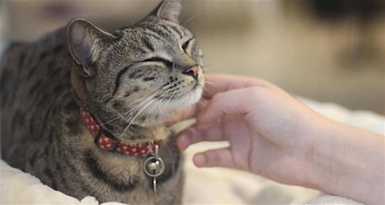 Animal cafes - cats