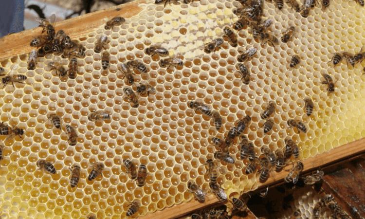 beekeeping hive