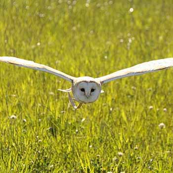 Owl Experience North Yorkshire