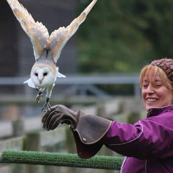 Falconry Staffordshire Picture