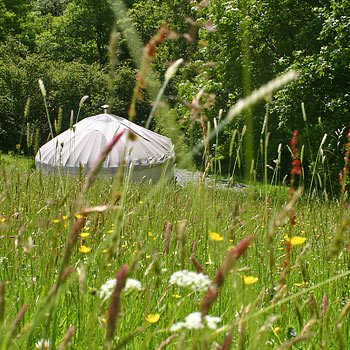 Two Night Forest Retreat In A Yurt Picture