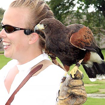 Birds Of Prey Hertfordshire