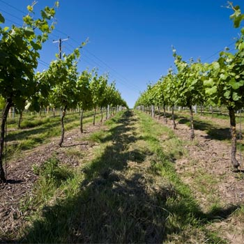 Sparkling Wine Tour East Sussex Picture