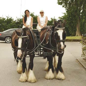 Horse and Carriage Experience