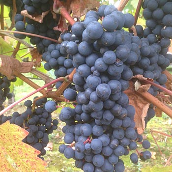 Wine Tours In Shropshire