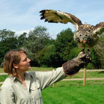 Falconry in Warwick