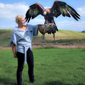 Falconry Experience Days