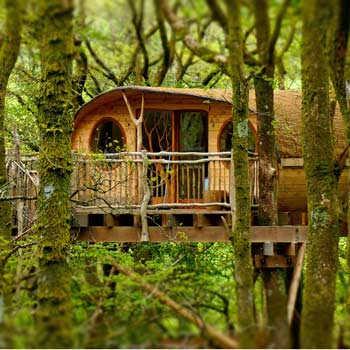 Luxury Tree House Break