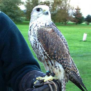 Kids Falconry North Warwickshire