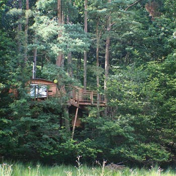 Tree Houses in the woods