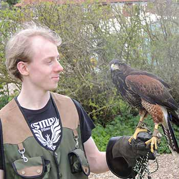 Falconry Suffolk