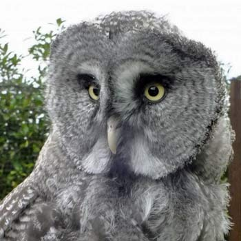Owl Experience Hertfordshire