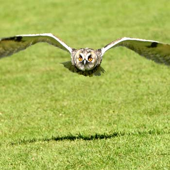 Owl Encounter Derbyshire Picture