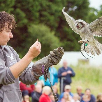 Birds Of Prey North Somerset Picture