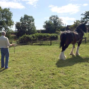 Shire Horse Experience Day