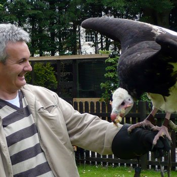 Falconry Birmingham Picture
