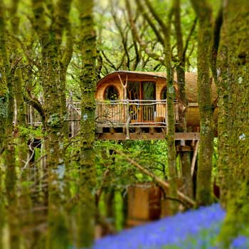 treehouse in bluebells