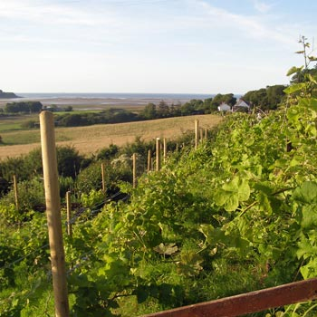 Anglesey Vineyard Tour & Tapas for Two