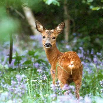 Wildlife Experience in West Sussex