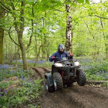 quads bluebells